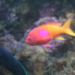Fisch_bunt