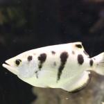 Fisch_weiß
