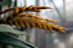 botanischer garten_02