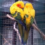 Papageienherz