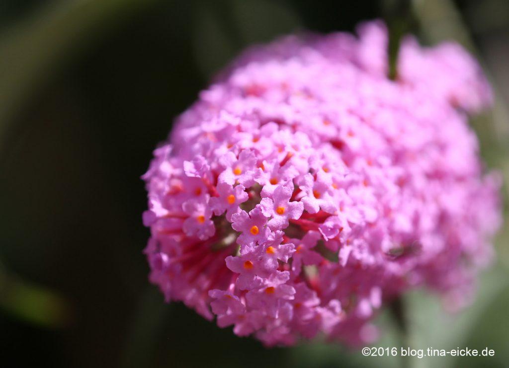 Blüten unscharf