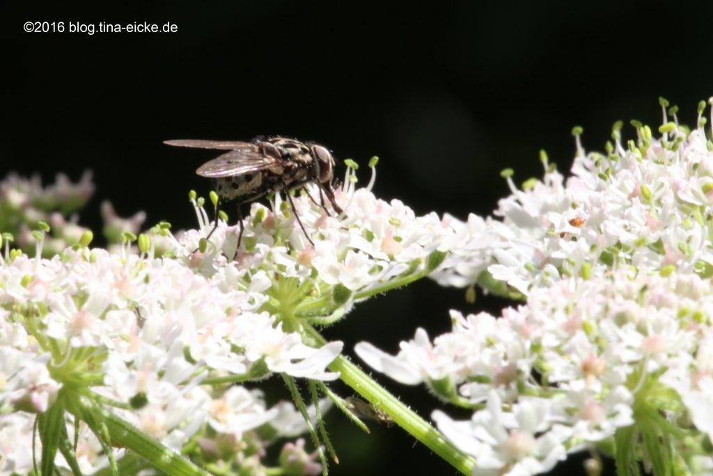 Fliege Elfenpfad