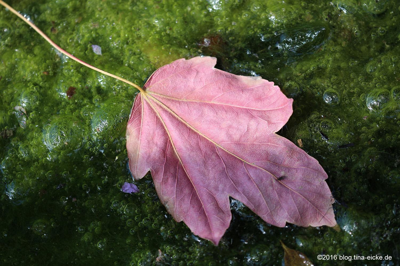 rosa Blatt